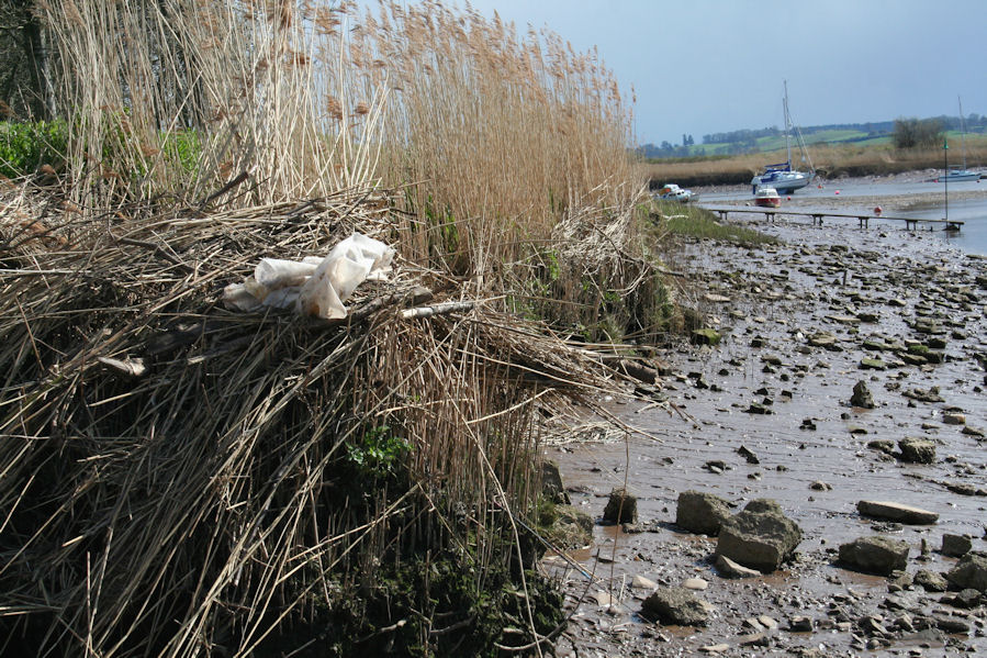 Erosion on Exe Estuary shoreline