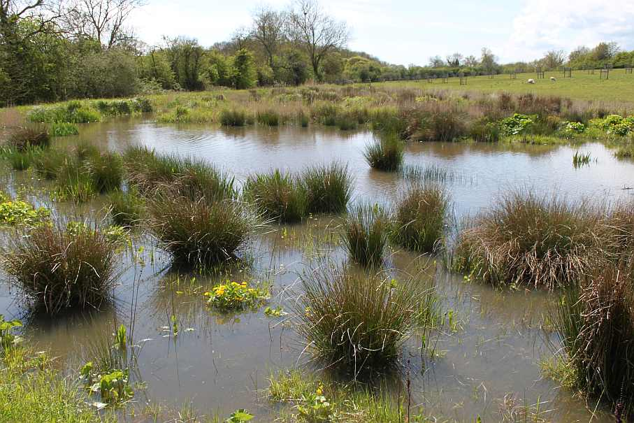 National Perry Pear Collection constructed wetland after 3 years