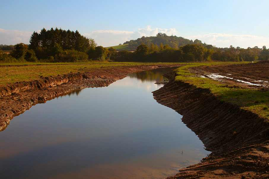 New wetland area at Hartpury National Perry Pear Collection