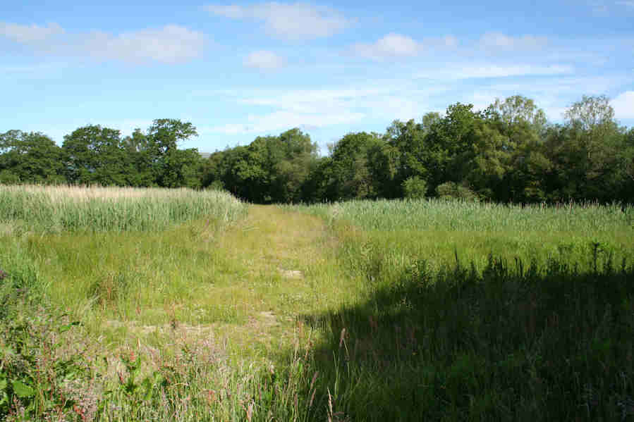 A working reedbed for a commercial timber yard