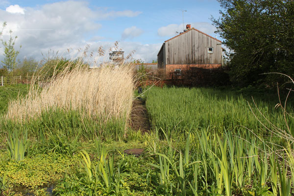 Reedbed treatment system at the Wildfowl & Wetlands Trust Slimbridge