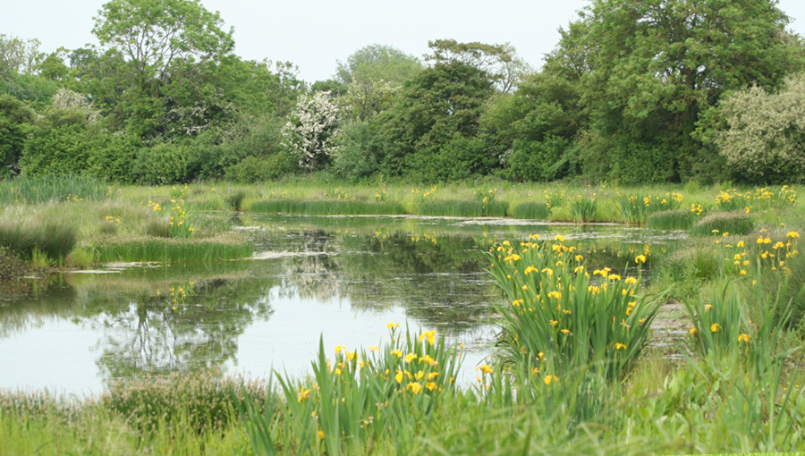 Wetland creation at the National Perry Pear Centre at Hartpury Gloucestershire