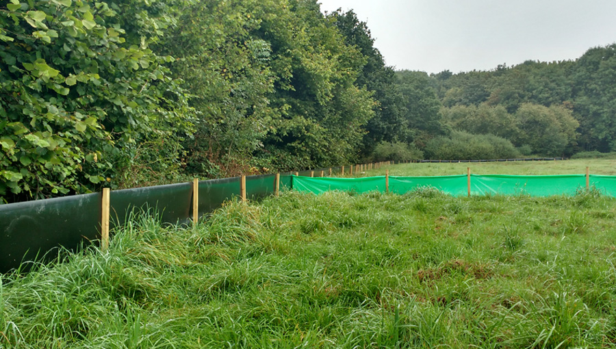Semi-permanent and temporary great crested newt fencing at Moreton