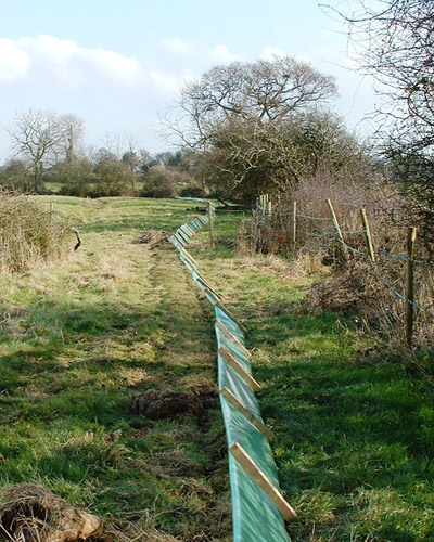 Temporary great crested newt fencing - also called amphibian fencing - on a development site in Basingstoke