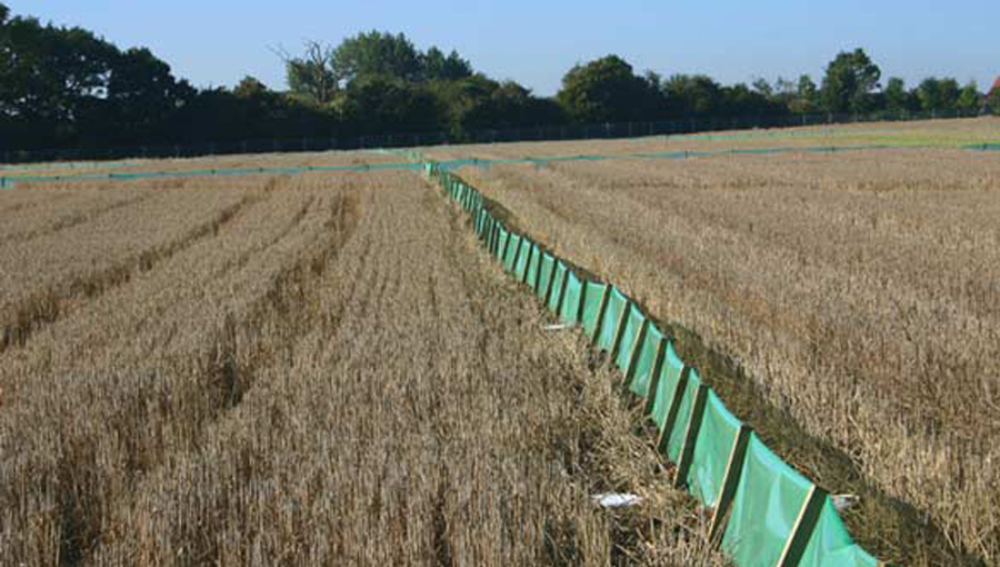 Temporary great crested newt fencing & pitfall traps on a housing development site in Basingstoke