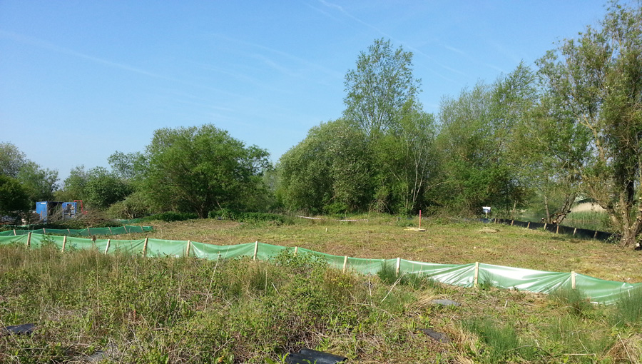 Temporary great crested newt fencing on a housing estate in Basingstoke