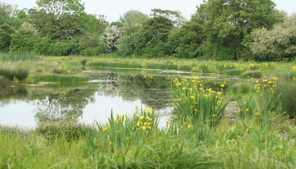 Wetland creation at the National Perry Pear Collection, Hartpury