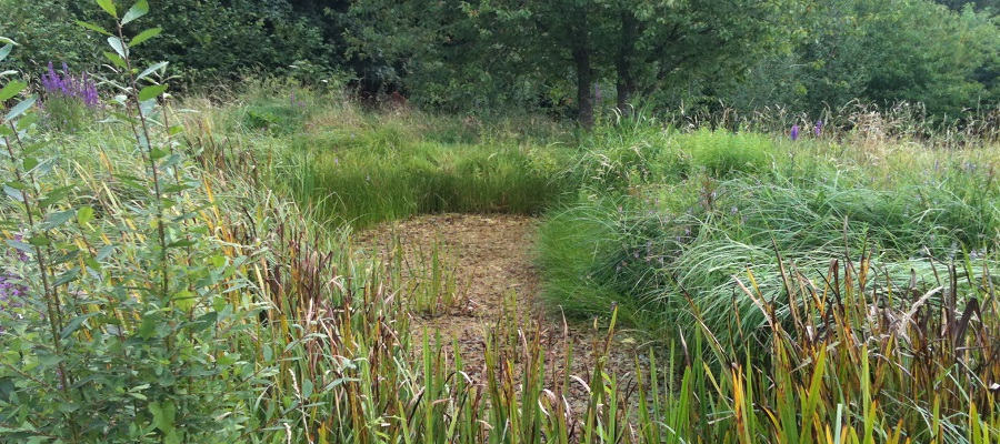 Silted up pond with emergent vegetation