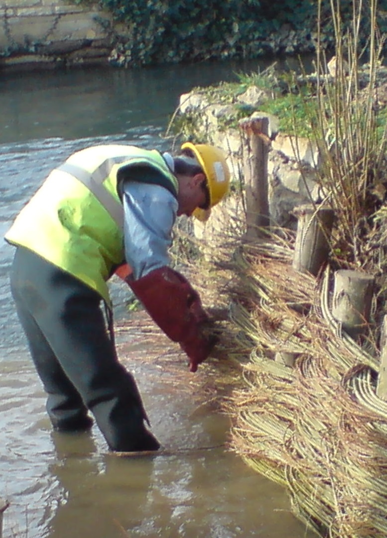 Willow spiling being installed along a river bank