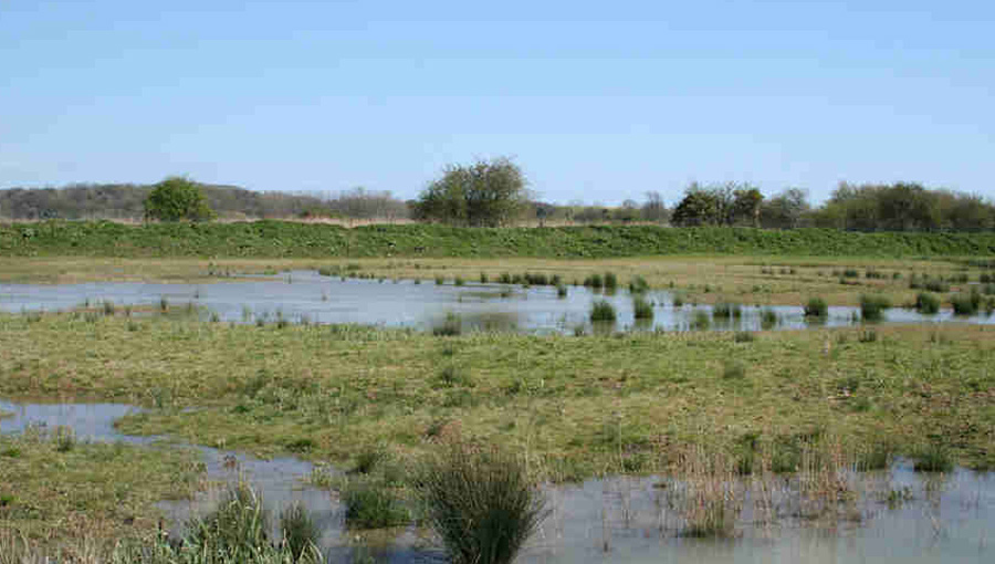 Arundel wet grasslands 2 years after construction