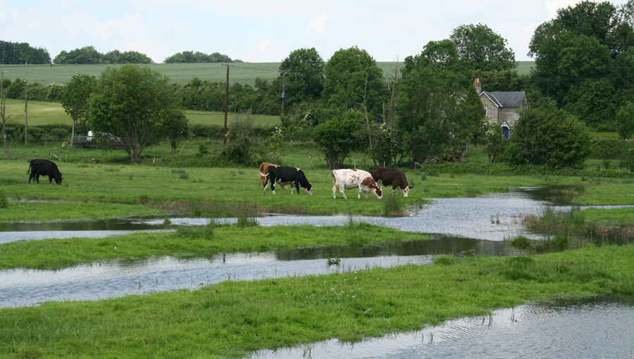 Wet meadow restoration and wetland habitat creation on a former water meadow at Barford in Wiltshire