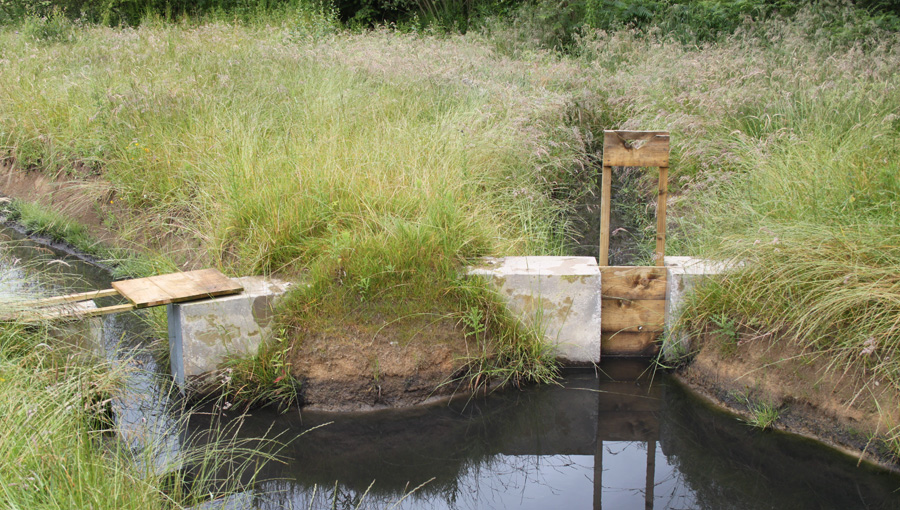 Channels in reedbed at BSW Timber