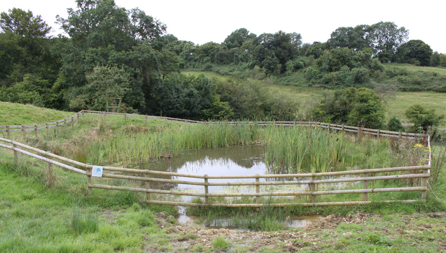 Newly constructed pond at Kites Nest