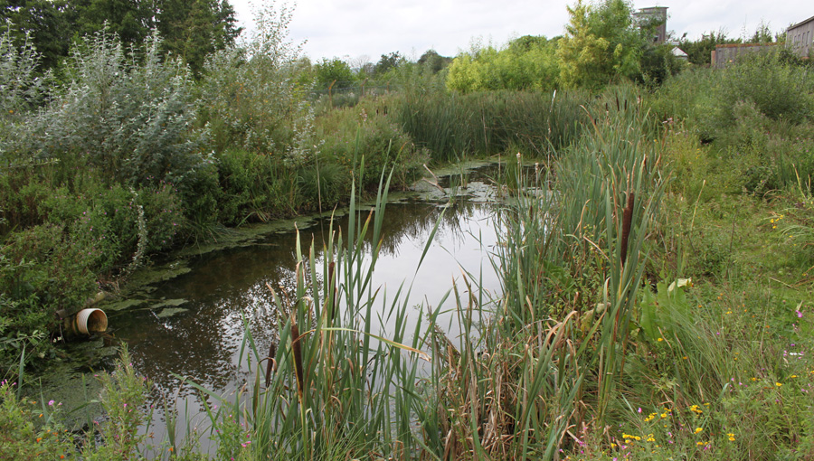 Reedbed at WWT Slimbridge