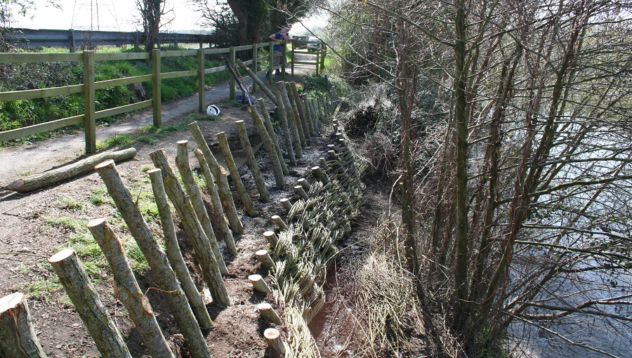 Willow spiling being installed along the River Severn for Sustrans