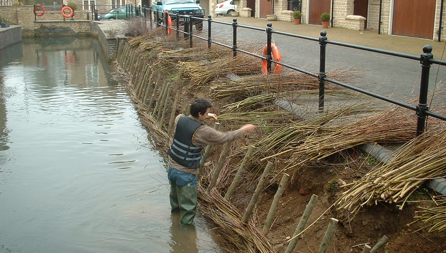 Installation of live willow spiling on a bank in a housing estate