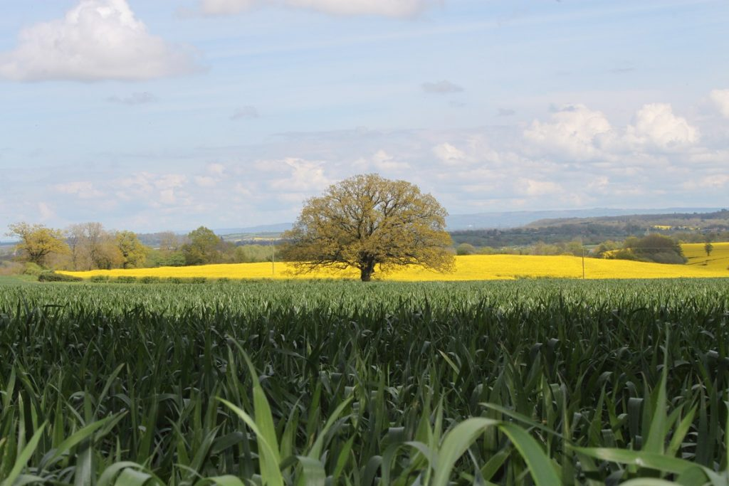 A view across the Gloucestershire countryside from Hartpury Perry Orchard