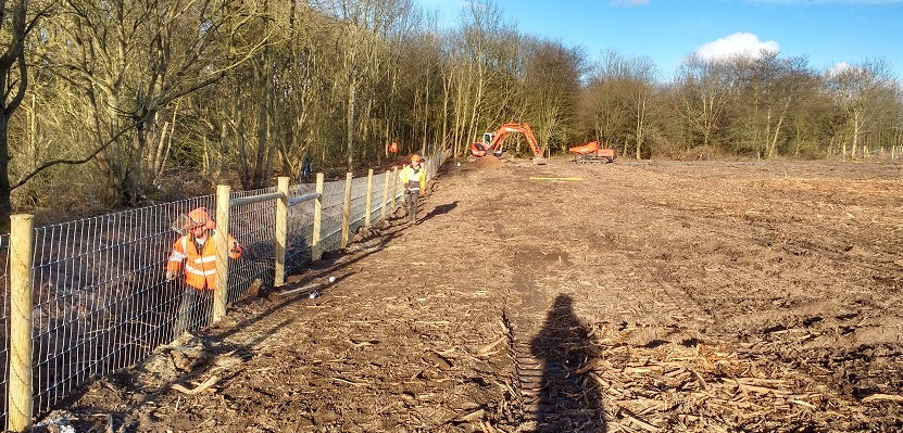 Installing badger exclusion fencing on a development site